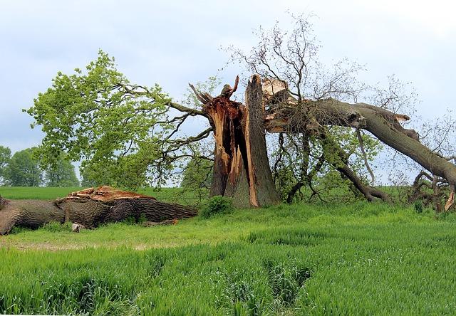 padlý strom.jpg